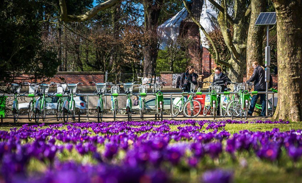 Obraz rowerów w parku