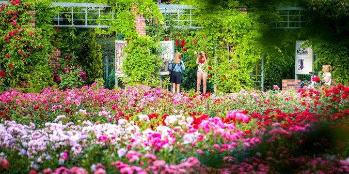 Różany Ogród Sztuki zaprasza w lipcu