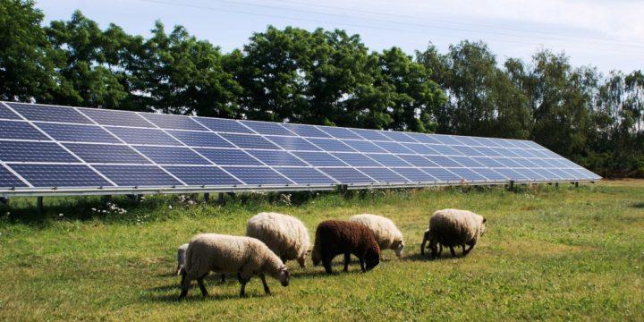 Ekologia i oszczędności idą w parze